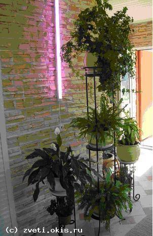 Фото комнатных растений в интерьере