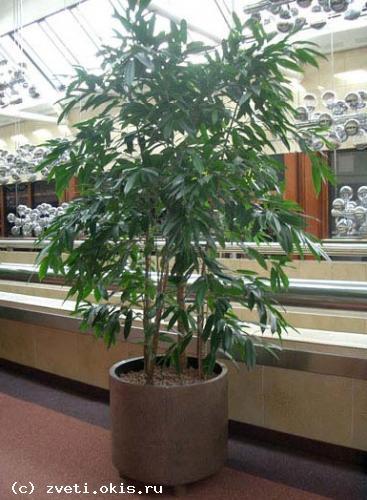 Комнатные растения горшечные